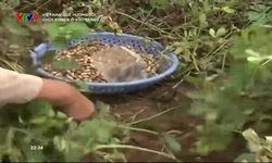 Việt Nam quê hương tôi: Chùa Khơme ở Sóc Trăng