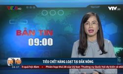 Bản tin 9h VTV8 - 16/10/2018