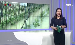 Bản tin 18h VTV8 - 11/12/2018