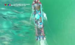 Chuyện biển chuyện người: Ngư dân làm du lịch