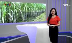 Bản tin 18h VTV8 - 16/8/2018