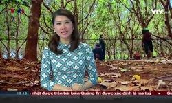 Bản tin 18h VTV8 - 06/12/2019
