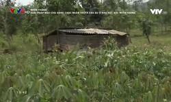 Nhìn thẳng: Giải pháp nào cho hàng chục ngàn ha cao su ở khu vực Bắc miền Trung