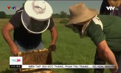 Phương pháp nuôi ong giảm căng thẳng tại Anh