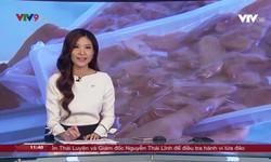 Tin tức 11h30 VTV9 - 19/9/2019