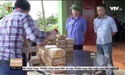 Việt Nam thử nghiệm thành công vaccine COVID-19 trên chuột