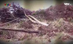 Nhìn thẳng: Xử lý cán bộ để xảy ra phá rừng
