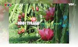 Chuyến xe buýt kỳ thú: Bình Thuận - Mùa quả ngọt