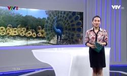 Kết nối miền Trung - 18/10/2017