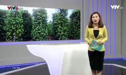 Kết nối miền Trung - 10/01/2018