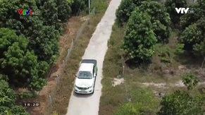 Nông nghiệp sạch: Xoài Cam Lâm sản phẩm nông nghiệp tỉnh Khánh Hòa