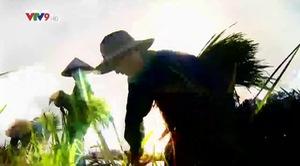 Rong ruổi đất phương Nam: Về Đồng Nai thăm thắng cảnh Bửu Long và Văn miếu Trấn Biên