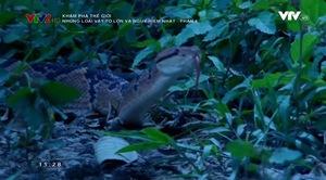 Khám phá thế giới: Những loài vật to lớn và nguy hiểm nhất - Phần 6