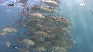 Khám phá thế giới: Đại dương xanh - Tập 8
