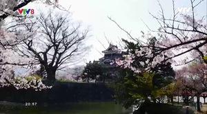 Bước chân khám phá: Cung đường rồng bay Nhật Bản - Phần 2
