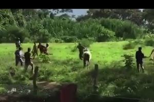 Người dân Venezuela giết bò bằng đá chống đói