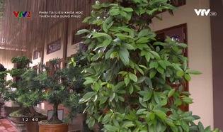 Phim tài liệu khoa học: Thiền viện Sùng Phúc
