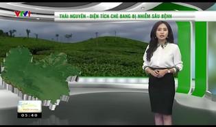 Bản tin thời tiết nông vụ - 22/6/2018