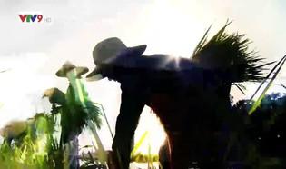 Rong ruổi đất phương Nam: Hương sắc Blao