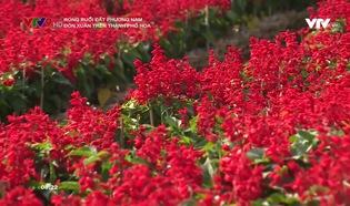Rong ruổi đất phương Nam: Đón xuân trên thành phố hoa