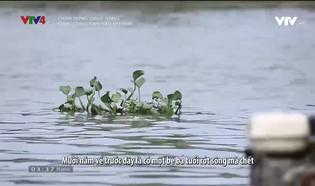 Chân dung cuộc sống: Cuộc sống dân vạn đò Huế