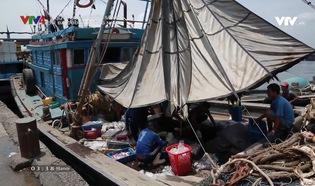 Chân dung cuộc sống: Đại dương không nhựa