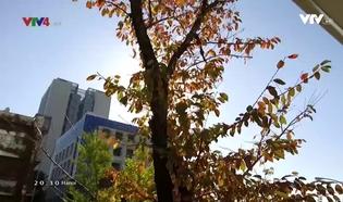 Con đường tri thức: Đại học Osaka nơi tương lai bắt đầu