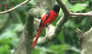 Phim tài liệu khoa học: Những loài chim ở Xuân Liên