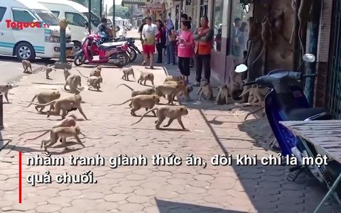 Khỉ và hươu tràn xuống đường xin đồ ăn