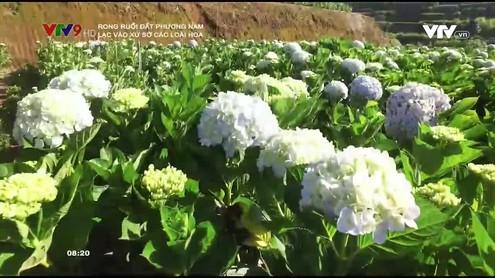 Rong ruổi đất phương Nam: Lạc vào xứ sở các loài hoa
