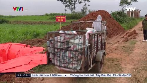 Công tác ngăn chặn dịch tả lợn châu Phi vướng vì thiếu kinh phí