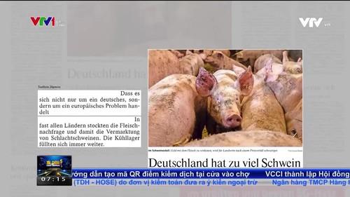 Thị trường thịt lợn châu Âu có nguy cơ sụp đổ