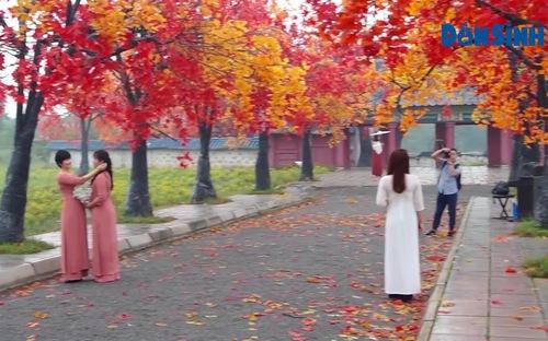 Vào thu, gái xinh đua nhau tạo dáng ở con đường ngập tràn phong lá đỏ giữa lòng Hà Nội
