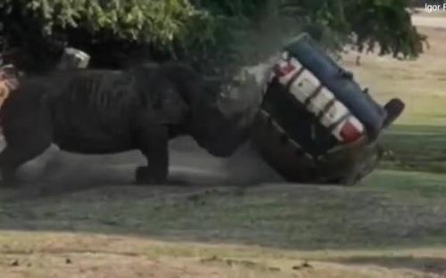 Sợ hãi trước cơn giận dữ của tê giác