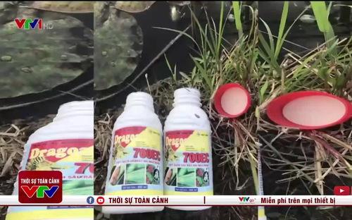 Cá chết hàng loạt, nghi bị lạm dụng thuốc BVTV