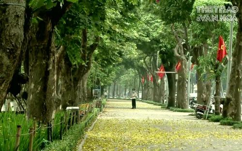 Hà Nội đẹp xao xuyến mùa lá sấu rụng