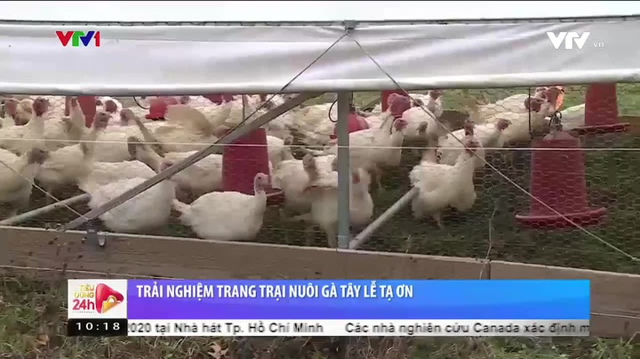 Trang trại nuôi gà tây tại Mỹ