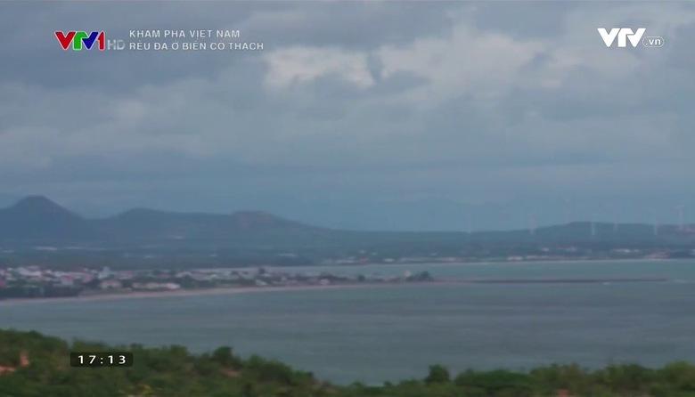 Khám phá Việt Nam: Rêu đá ở biển Cổ Thạch