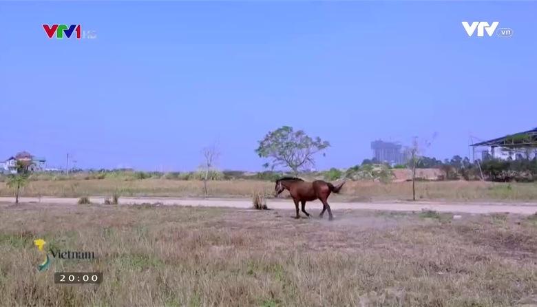 S - Việt Nam: Ngôi nhà của những chú ngựa