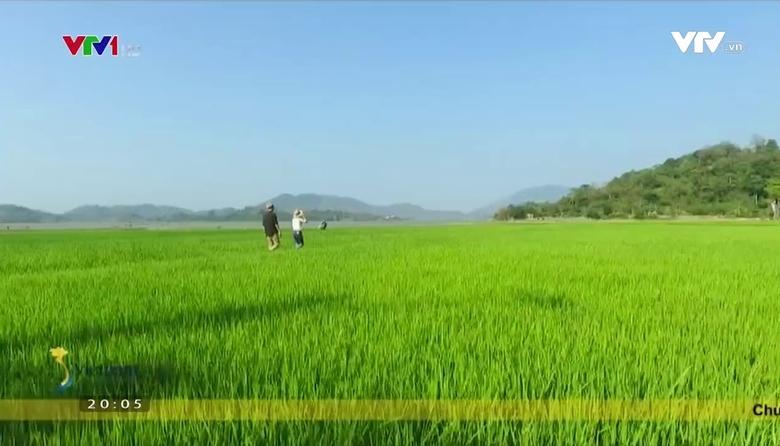 S - Việt Nam: Hành trình giá trị cà phê Tây Nguyên