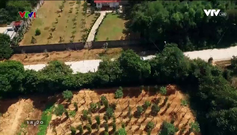 Nông nghiệp sạch: Hạt tiêu Phú Quốc sản phẩm nông nghiệp tỉnh Kiên Giang
