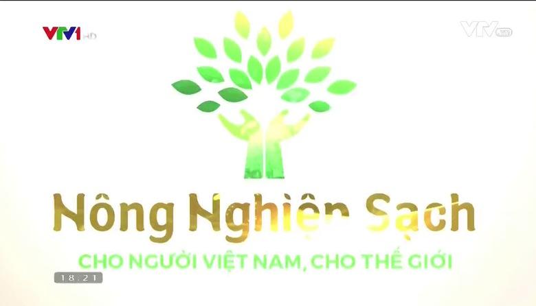 Nông nghiệp sạch: Rau an toàn sản phẩm nông nghiệp tỉnh Quảng Ninh