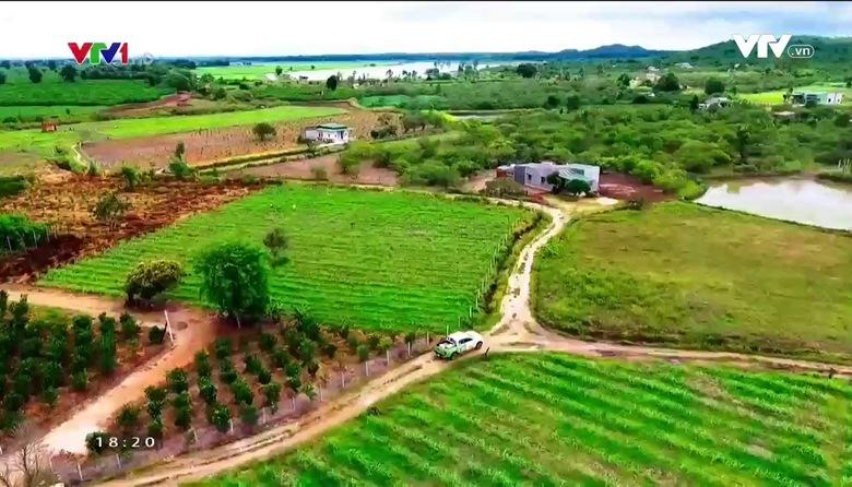 Nông nghiệp sạch: Trà thảo mộc sản phẩm nông nghiệp tỉnh Đắk Lắk