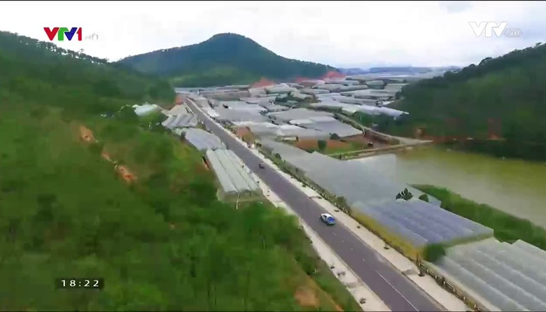 Nông nghiệp sạch: Dưa Pepino sản phẩm nông nghiệp tỉnh Lâm Đồng