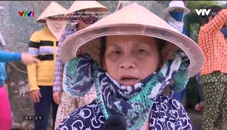 Chuyện nhà nông với nông nghiệp: Quy hoạch lại vùng nuôi tôm hùm