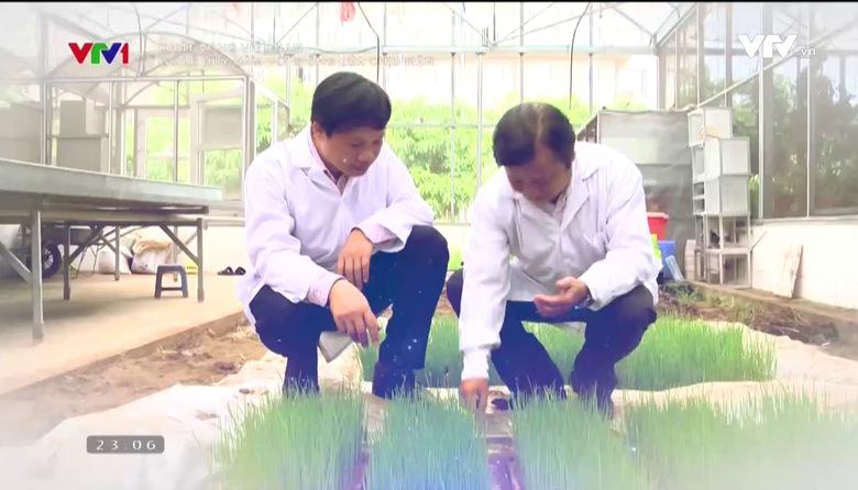 Khát vọng Việt Nam: Người giúp lúa chịu nước sâu, đất mặn