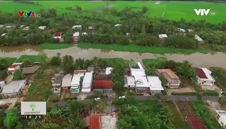 Nông nghiệp sạch: Dưa lê Kim Bích sản phẩm nông nghiệp tỉnh An Giang