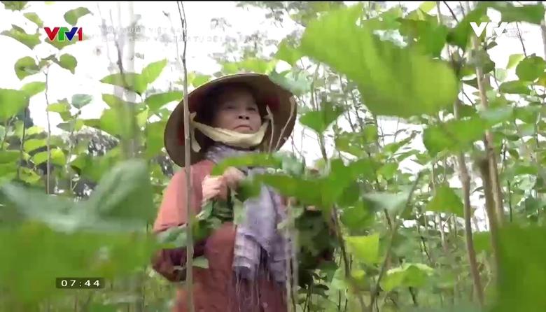 Khám phá Việt Nam: Người giúp vạn tằm tự dệt chăn tơ