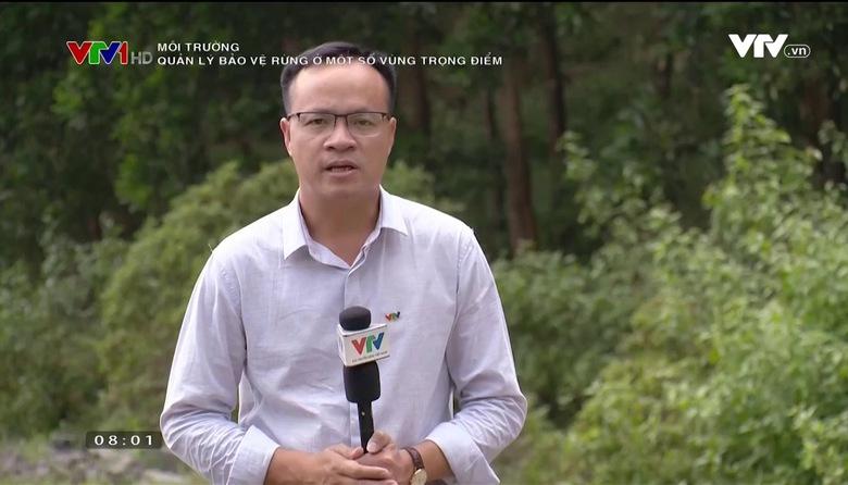 Môi trường: Quản lý bảo vệ rừng ở một số vùng trọng điểm