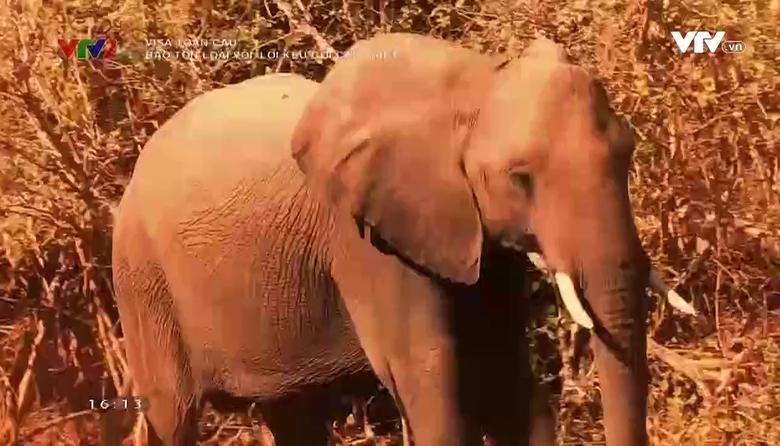 Visa toàn cầu: Bảo tồn loài voi, lời kêu gọi cấp thiết